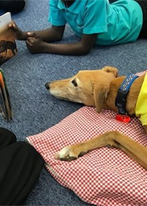 Paws & Read - Therapy Dogs Nationwide