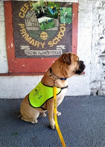 Schools Visit - Therapy Dogs Nationwide