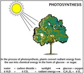 plant cell diagram with definitions 2003 jeep liberty engine photosynthesis – life's primary energy source - lesson teachengineering