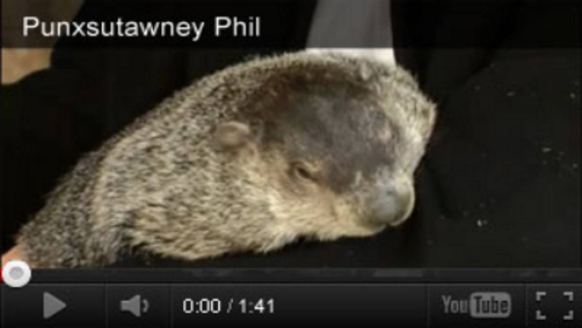 hight resolution of Groundhog Day Videos \u0026 Activities - TeacherVision