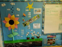 Plants Display | Teaching Ideas