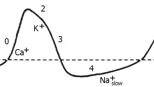 The action potential of the sinus node looks like this:
