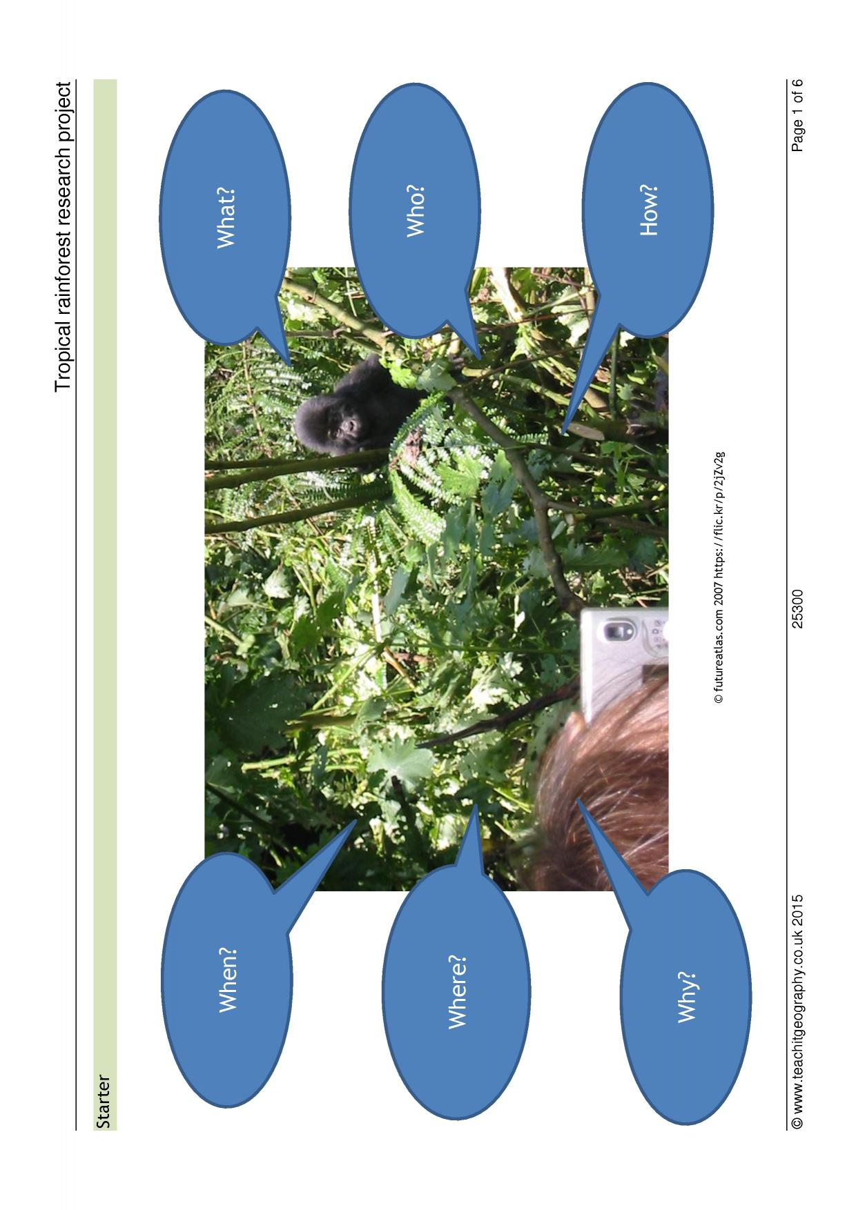 Rainforest Plants Worksheet