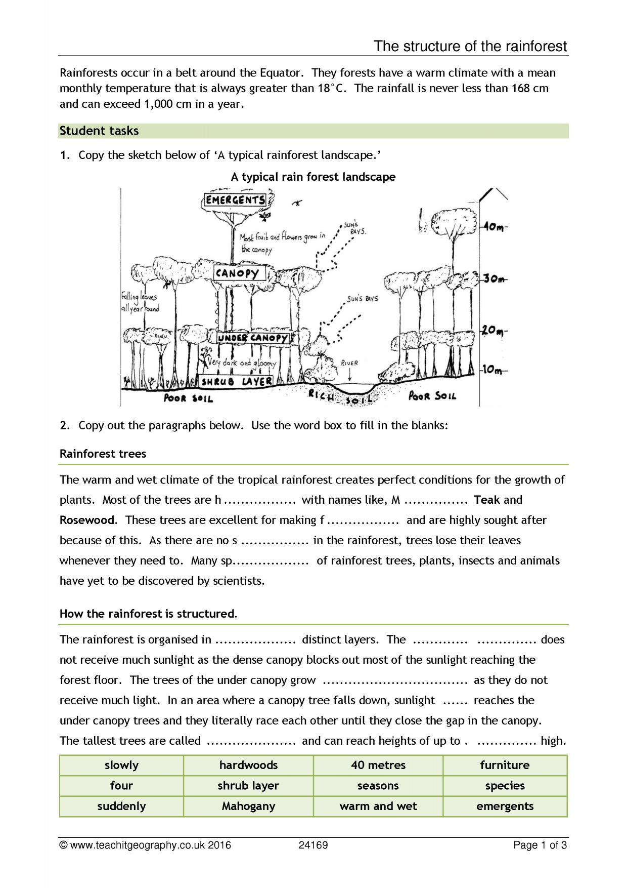Amazon Rainforest Worksheet