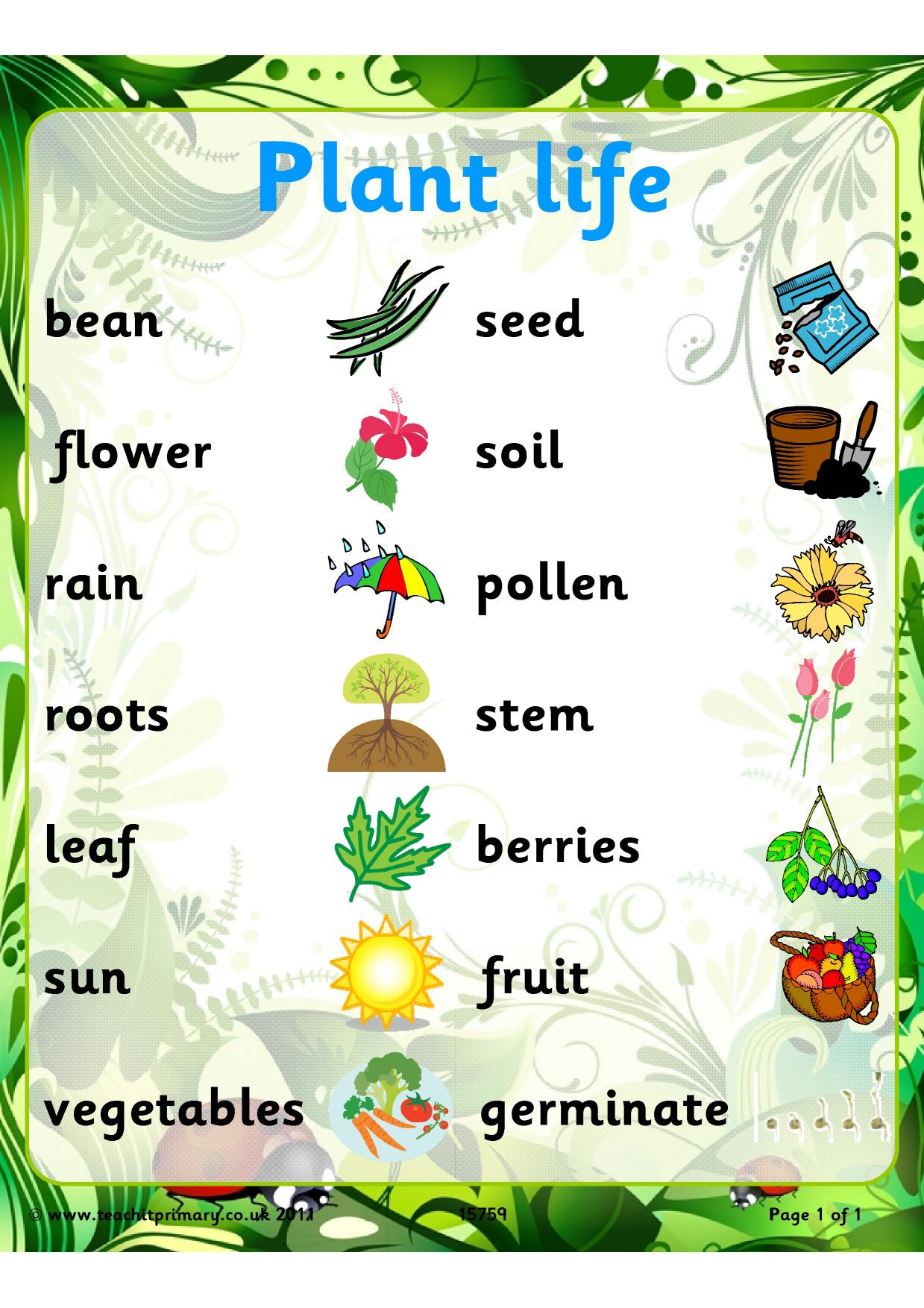 Plant Life Word Mat