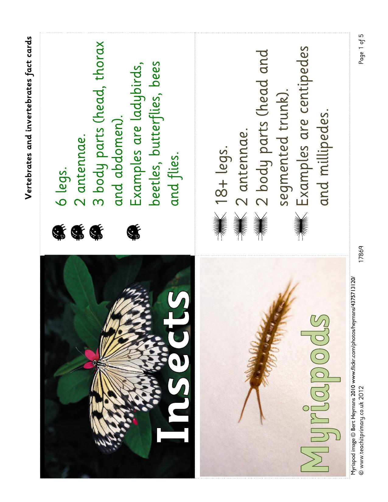 Vertebrates And Invertebrates Fact Cards