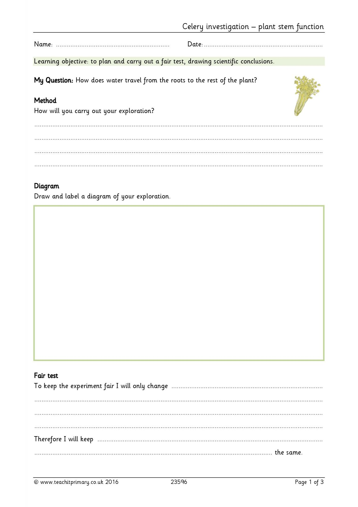 Zakat Worksheet Ks2