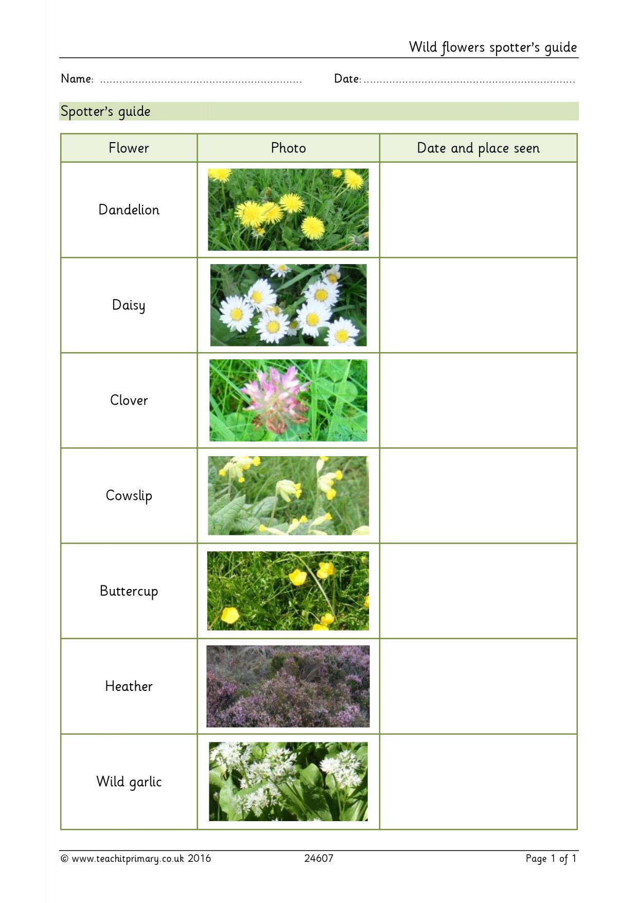 Plant Evolution Worksheet