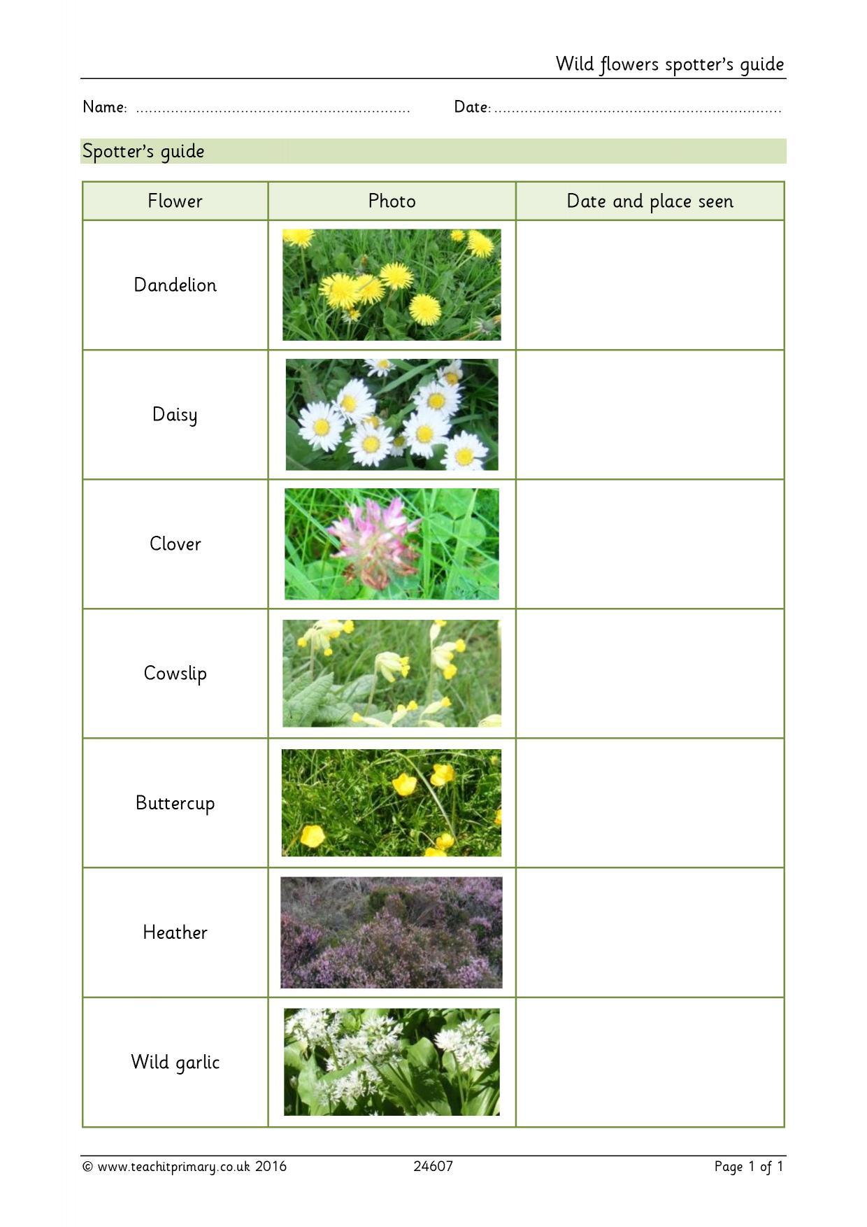 Plant Evolution Worksheet