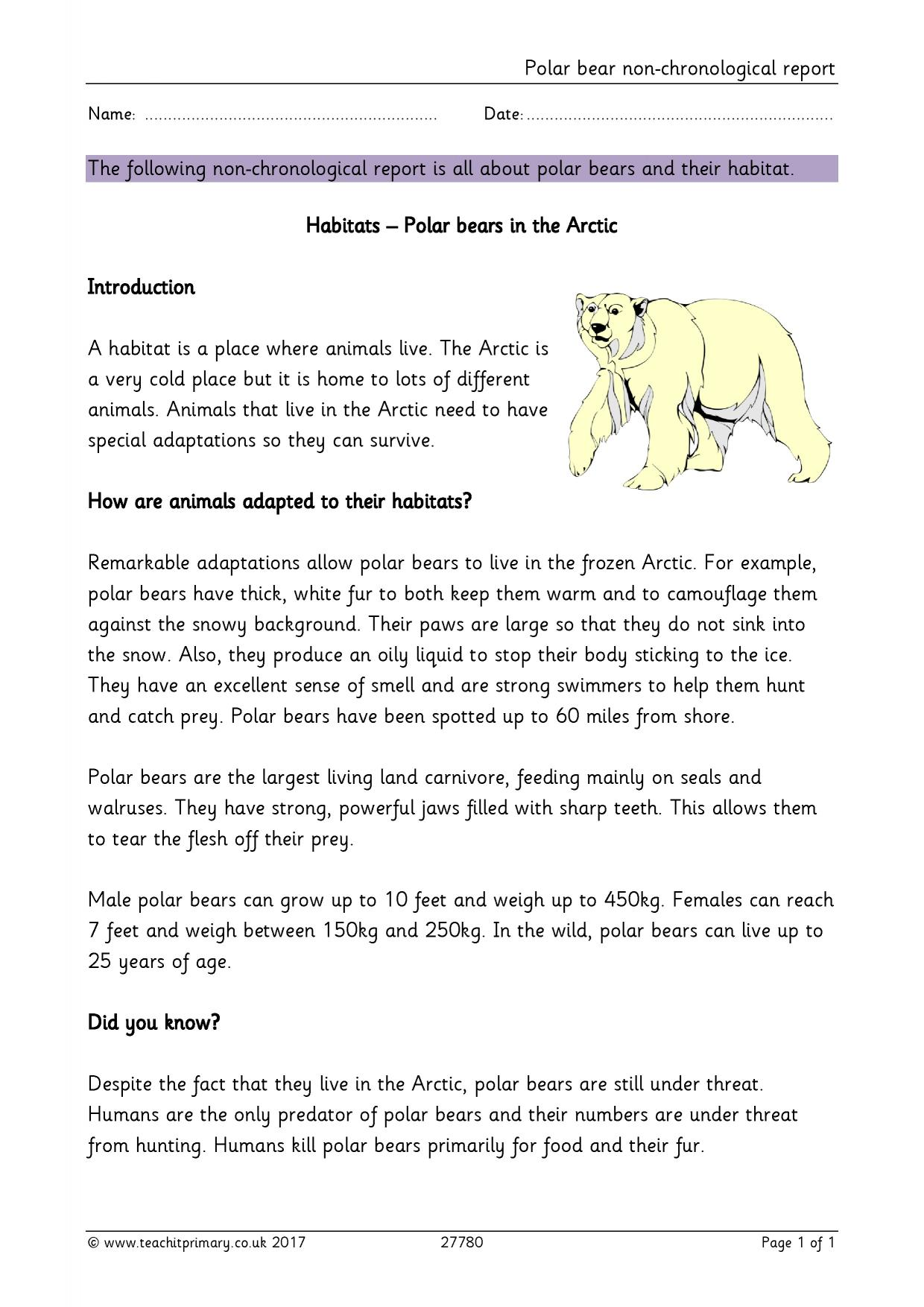 Polar Bear Non Chronological Report