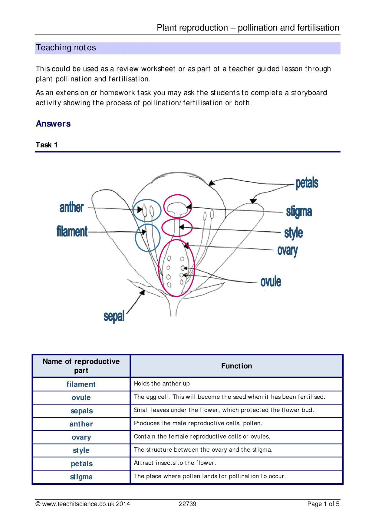 parts of a seed diagram worksheet 4 pole trailer wiring plant reproduction pollination and fertilisation