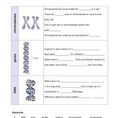 Dna Diagram Worksheet 2002 Chevy Avalanche Problems Ks3 | Cells (ks3) Teachit Science