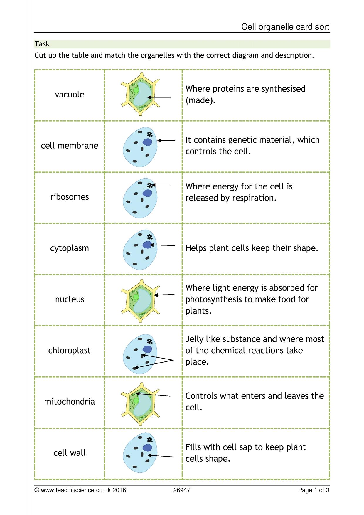 Cell Organelle Card Sort