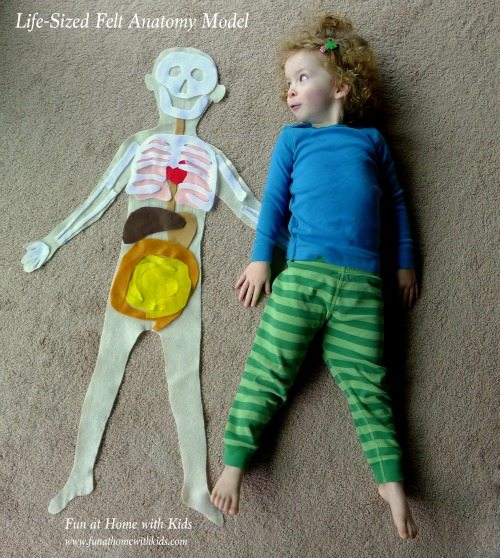 Learning about our bodies is fun with felt