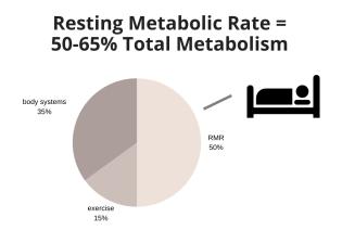 total metabolism breakdown