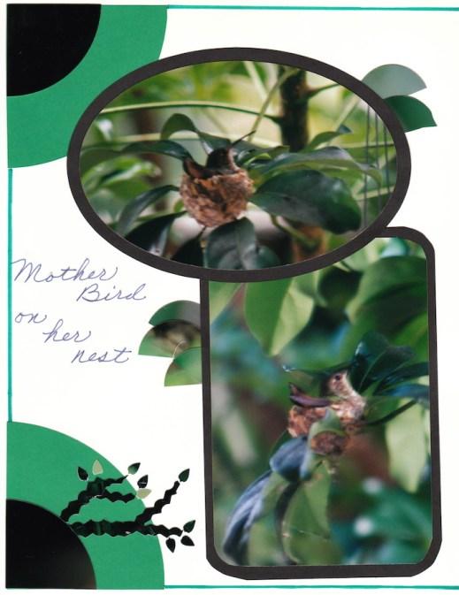 2000 Hummingbird_0004