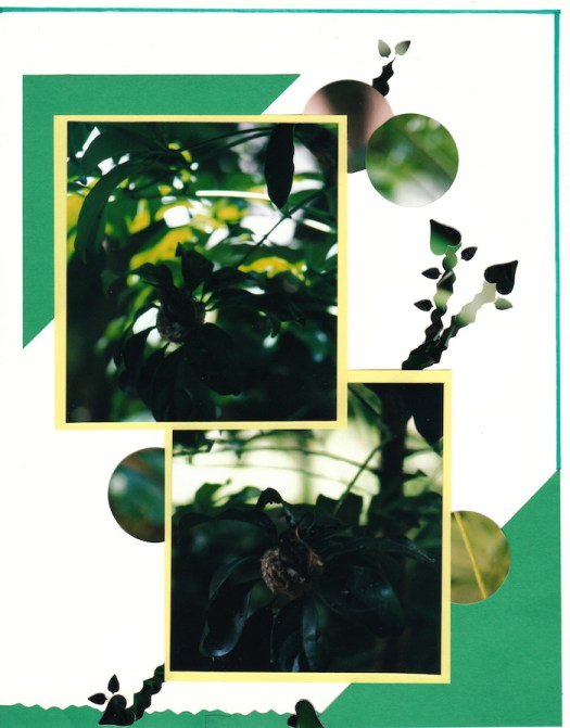 2000 Hummingbird_0009