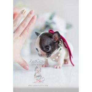 Artistic Bulldog Puppies 2019 Wall Calendar Bulldog Puppies 2019