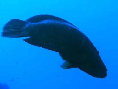 ケラマ諸島ダイビングの様子