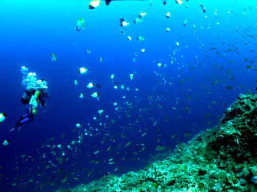 沖縄ダイビングの様子