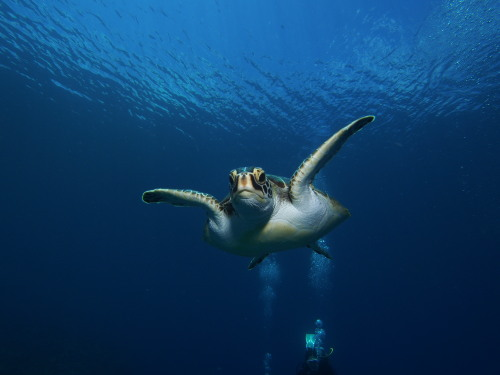 ダイビング沖縄