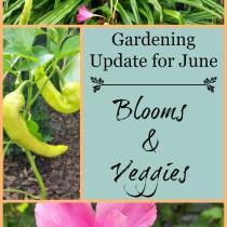 blooms & veggies
