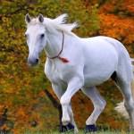 1920x1080 Running Horses Wallpaper Desktop Data Beautiful White Horse Wallpaper Hd 1920x1080 Wallpaper Teahub Io
