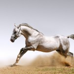 Use 9 Beautiful White Running Horse Wallpapers For Horse Running On The Ground 1920x1200 Wallpaper Teahub Io