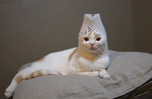 猫メイクアップ