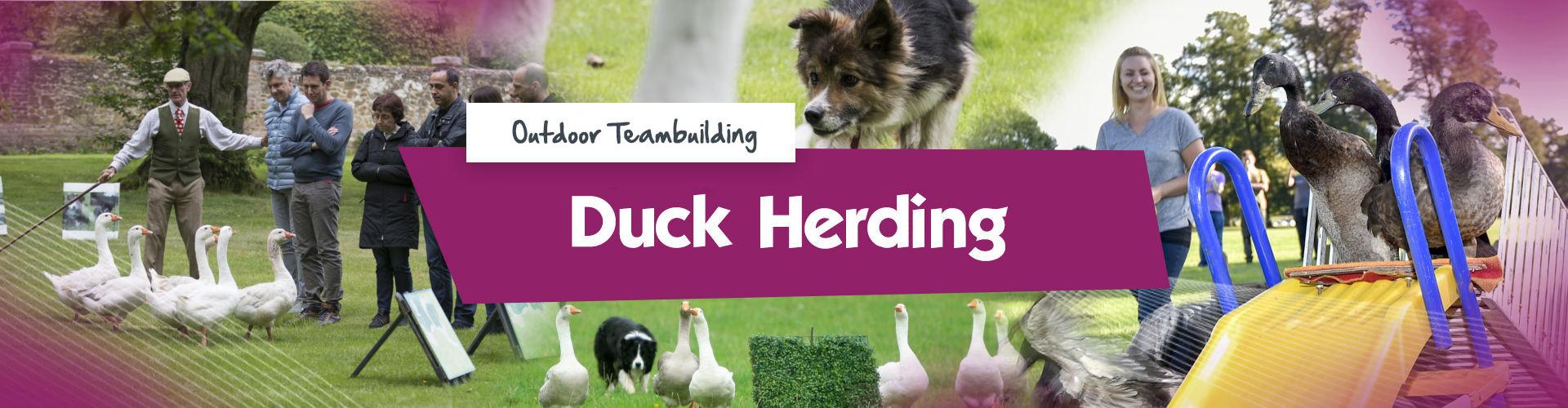 Duck Herding Banner