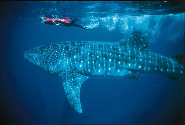 Groepsdynamica-het-onder-water-leven-van-een-team-teamchange