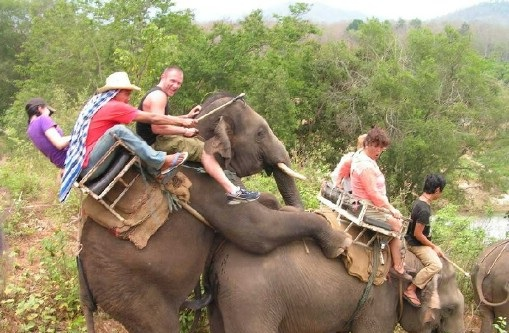 humping elephants, Bad Family Photos, Worst Family Photos, Funny Family Photos, pictures, awkward family, ugliest family photos, family photo fail, wtf, crazy family, people riding elephants