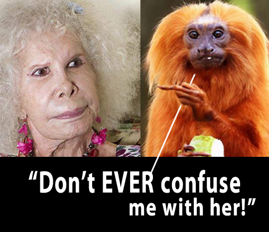 Duchess of Alba Funny Monkey Funny Pictures Funny Sayings grumpy cat stupid people memes funny animals crazy woman funny hair bad fam ellen funny pictures weird pictures pics awkward family photos bad tattoos worst tattoos stupid people bad family photos funny family pics random strange crazy wtf