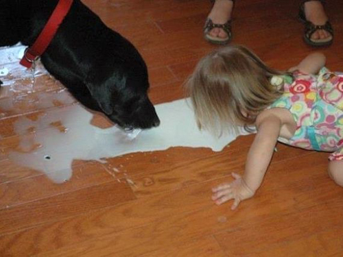 girl lapping milk from floor girl with dog Balls door knocker funny pictures weird pictures pics awkward family photos bad tattoos worst tattoos stupid people bad family photos funny family pics random strange