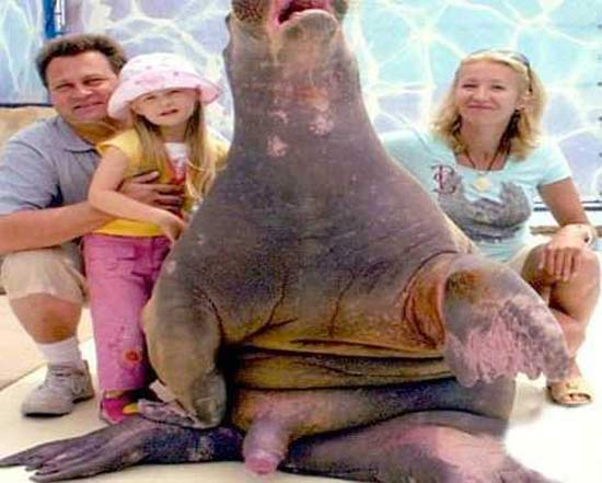 Sea World Excitement ~ 38 Awkwardly Funny Family Vacation Photos