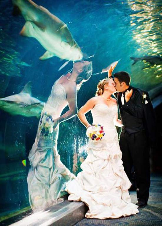 Shark! ~ 14 Funny Wedding Pictures