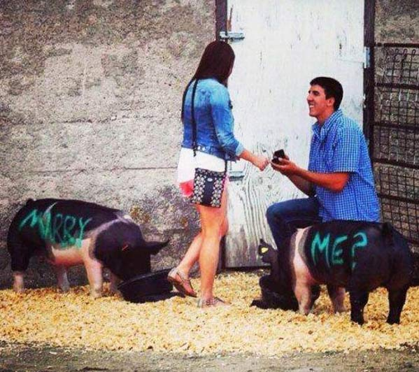 marry-me-on-pigs