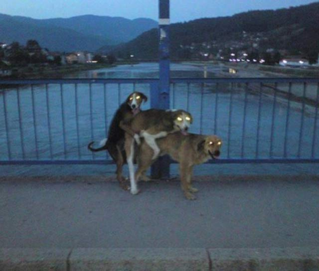 3 Dogs Humping GLowing Eyes ~ 25 Creepy Photos