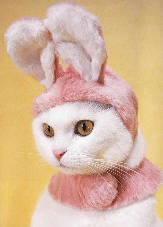 cool poster of cat with bunny ears