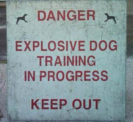 funny signs explosive dog training in progress keep out