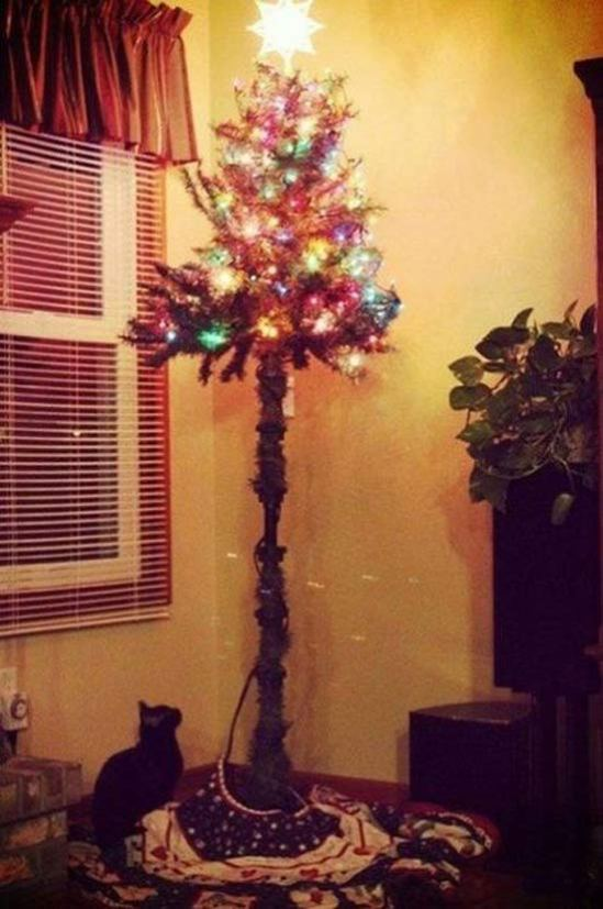 26 Funny Awkward Christmas Photos ~ Tree trimmed so cat can't climb