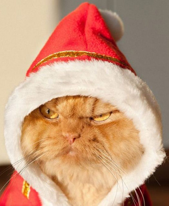 Funny Awkward Christmas Photos ~ grumpy cat grinch in santa hat