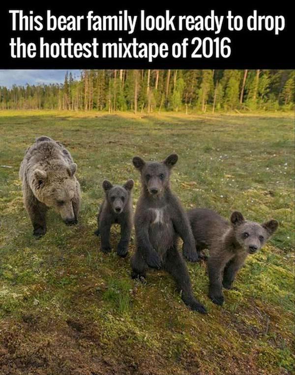 Funny pics~ bear family ready to drop hottest mixtape