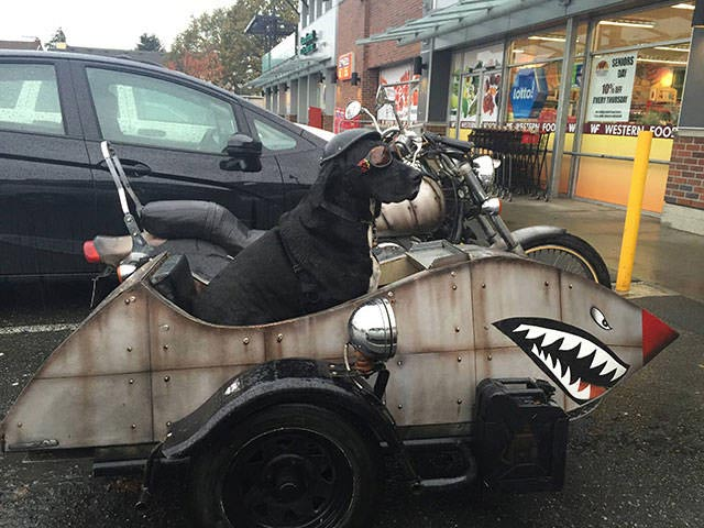 Funny pics~ cool dog in motorcycle sidecar, shark