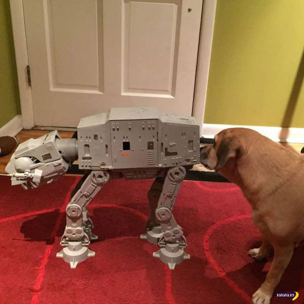 Funny pics~ dog sniffing butt of Star Wars walker
