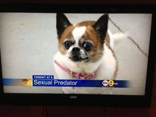 Funny news caption, TV: pic of dog labeled sexual predator