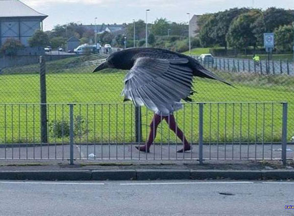 perfectly timed photos ~ bird with human legs