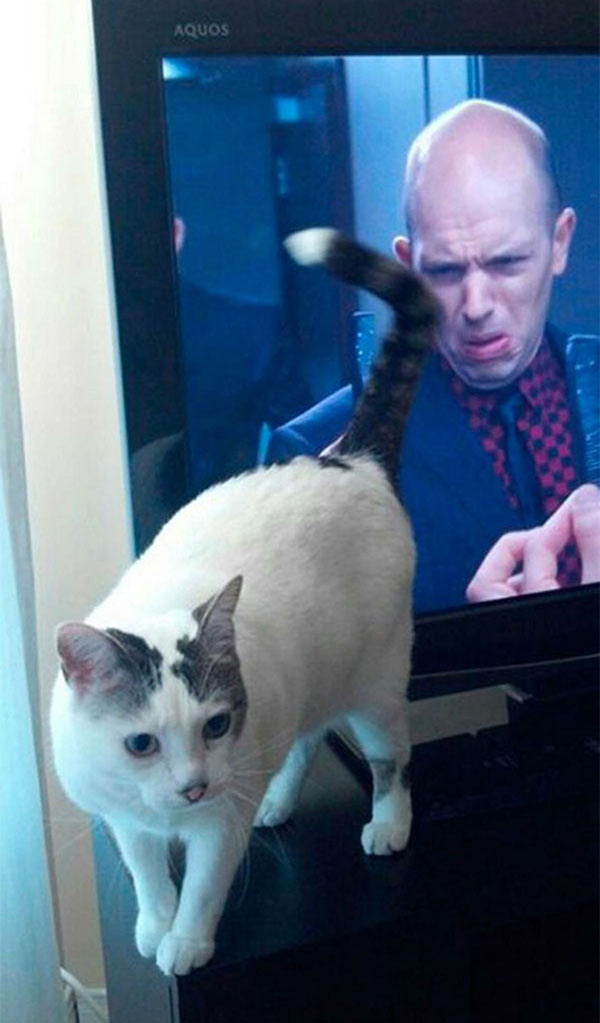 perfectly timed photos ~ face on TV, cat butt ewww