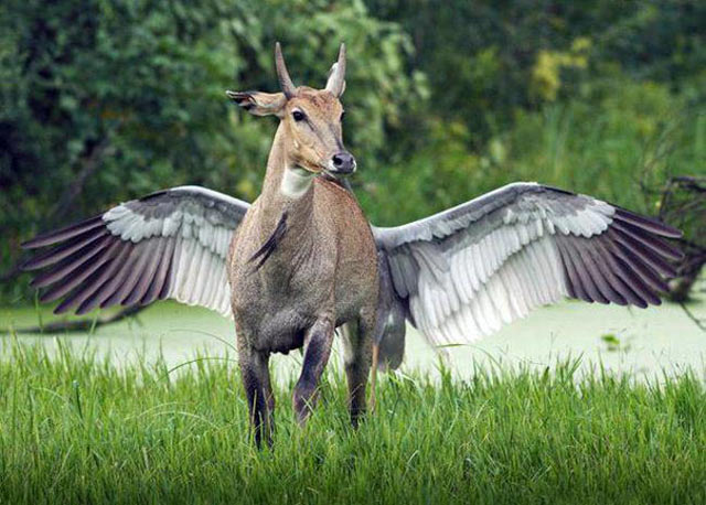 perfectly timed photos ~ deer with giant wings
