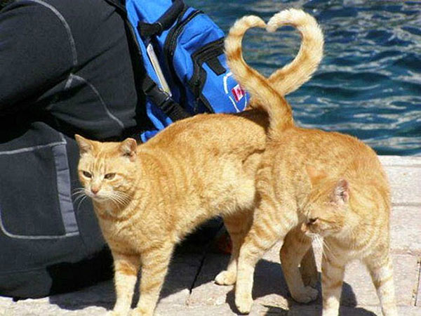 perfectly timed photos ~ two cats, tails form heart